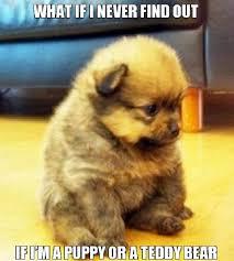 Puppy Memes - funny puppy meme