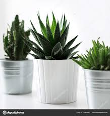 plantes chambre divers cactus plantes grasses pots différents bouchent décoration