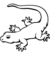 gecko coloring pages animal coloring pages of pagestocoloring