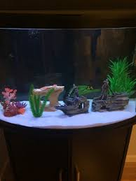 best places to buy aquarium decorations 273534