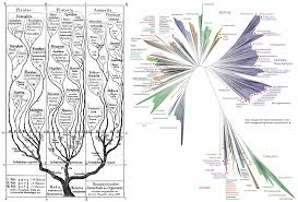 tree of life filling the gaps with dark matter u2013 reconstructing the tree of