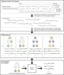 synthetic recombinase based state machines in living cells science