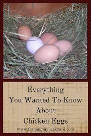 everything you wanted to know about chicken eggs hens garden