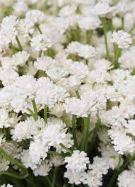 Fake Flowers For Wedding Cream Baby U0027s Breath Silk Flowers Rustic Wedding Afloral Com