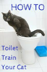 best 25 litter box smell ideas on pinterest litter box hidden