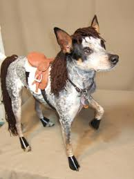 halloween animal costume ideas 10 dogs disguised as other animals for halloween halloween