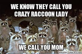 Racoon Meme - pretty raccoon meme 1000 images about raccoons on pinterest baby
