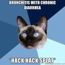 Bronchitis Meme - wednesday 12 november 2014 meme images chronic illness cat