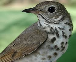 state bird of south dakota state birds