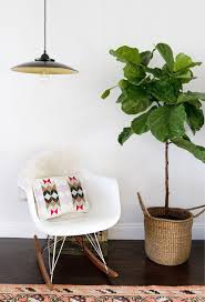 190 best indoor u0026 hanging plants images on pinterest plants