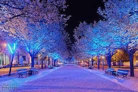 snow winter snowfall holidays lights nature