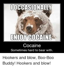 Bear Cocaine Meme - ioccasionally enjomcocaine cocaine sometimes hard to bear with