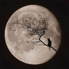 cat on the moon beautifully pictured on digital photo