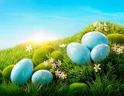 blue easter eggs blue easter eggs stock photo image 50621908