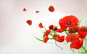 poppies flowers flower inspiration