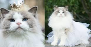 Bow Down Meme - i can has cheezburger royal funny internet cats cat memes and