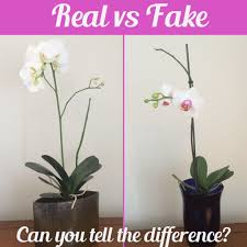 Artificial Orchids Orchids Real Vs Fake