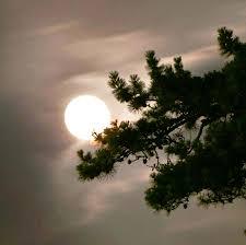 moon hanging on pine tree wolmyeongdong