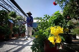 sun loving plants for summertime in texas san antonio express news