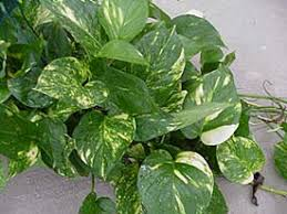 houseplant needs houseplants university of illinois extension