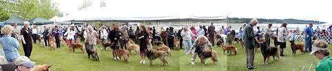 belgian sheepdog club of america national specialty nationals abtc
