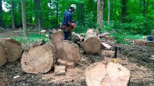 husqvarna 460 rancher chain saw 24 in bar huge oak no problem