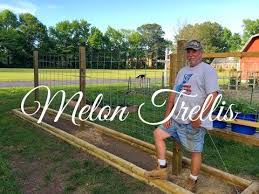 How To Build A Trellis Hd How To Build A Melon Trellis Youtube