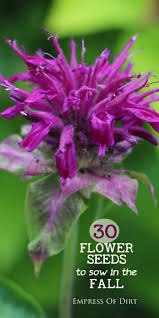 30 flower seeds to sow in the fall flowering plants weather and