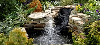 build a pond or water garden