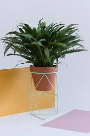 biggest house plants 1225 best houseplants images on pinterest indoor house plants