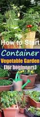 container vegetable gardening for beginners container gardening