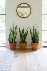 houseplants best 25 house plants ideas on pinterest indoor house plants