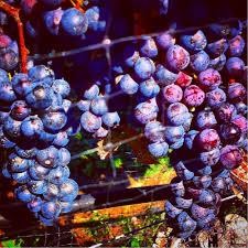 truro vineyards of cape cod 187 photos u0026 141 reviews venues
