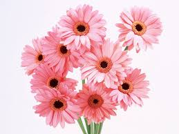 flowers international flowers for your favorite girl wallpapers and images wallpapers