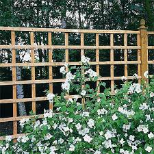Metal Garden Trellis Uk Forest Heavy Duty Trellis Panels Webbs Direct Garden Centre
