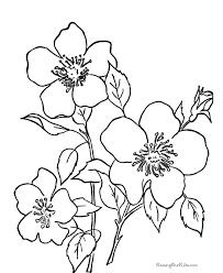 coloring pages to print flowers flower vitlt com
