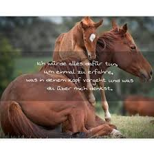 pferdesprüche sprüche über für pferde pferde spruch instagram profile
