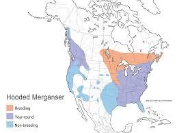 Duck Migration Map Hooded Merganser Waterfowl Id