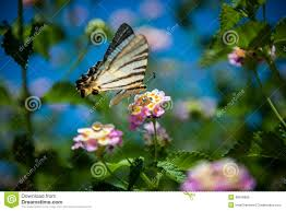sweet flower and butterfly stock photo image 48572335