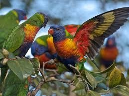 beautiful birds wallpaper google search bird lover pinterest