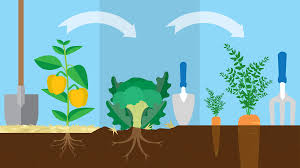 three year crop rotation plan fix com