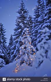 winter forest christmas tree evening christmas forest trees stock