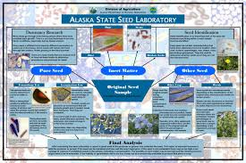 seed collection of australian native plants alaska plant materials center state of alaska department of