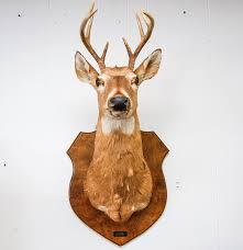vintage mounted deer head ebth