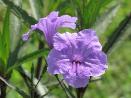 free images flower purple green evergreen botany blooming