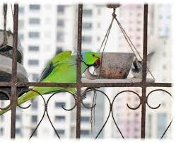 mumbai resident sets up 10 bird shelters rears 350 butterflies