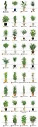 the beginner u0027s guide to trendy indoor plants indoor plants and