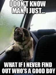 Insperational Memes - 11 inspirational dog memes my cinema lightbox