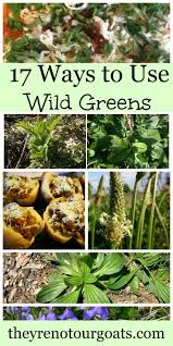 plants native to russia 222 best images about wild foraging on pinterest sugaring
