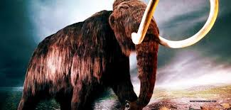 scientists verge resurrecting long extinct woolly
